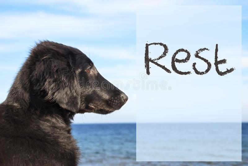 Hund in Ozean, Text-Rest lizenzfreies stockfoto