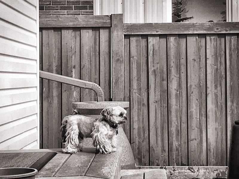 Hund på däck royaltyfria foton