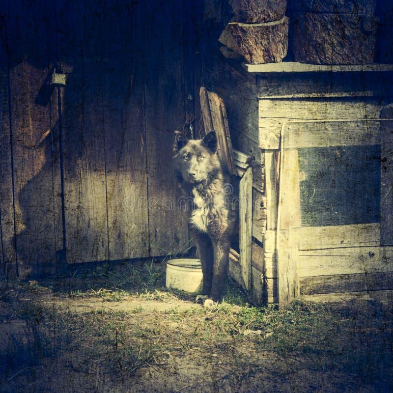 Hund på en kedja på dörren fotografering för bildbyråer