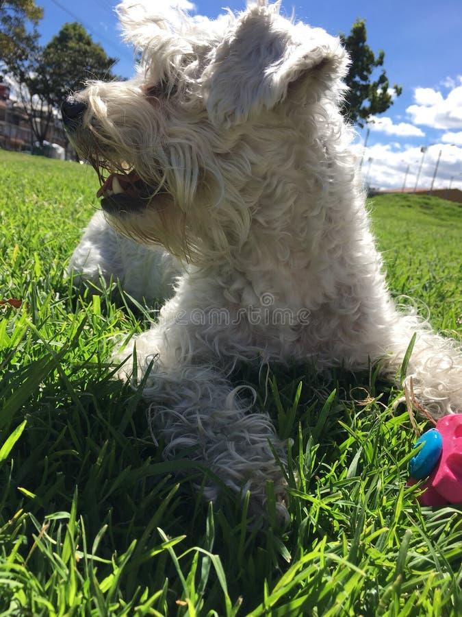 Hund på en solig dag arkivfoton