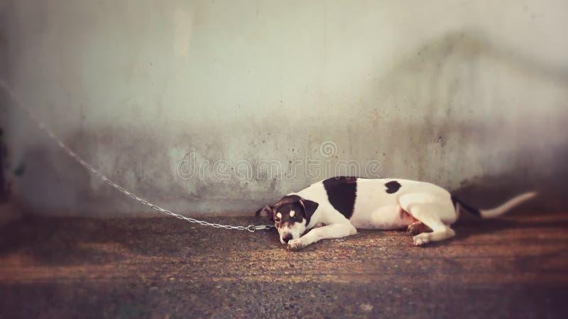 Hund på ett koppel royaltyfri fotografi