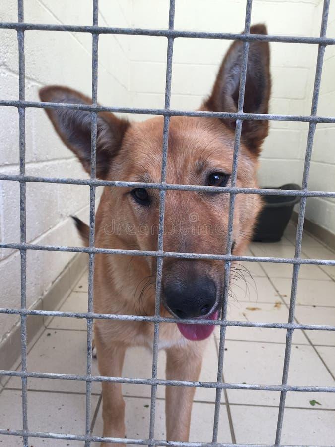 Hund på ett räddningsaktionskydd i en hundkoja arkivfoto