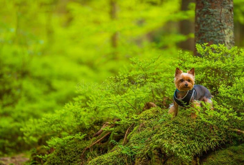 Hund på Forest Trail Walk arkivfoton