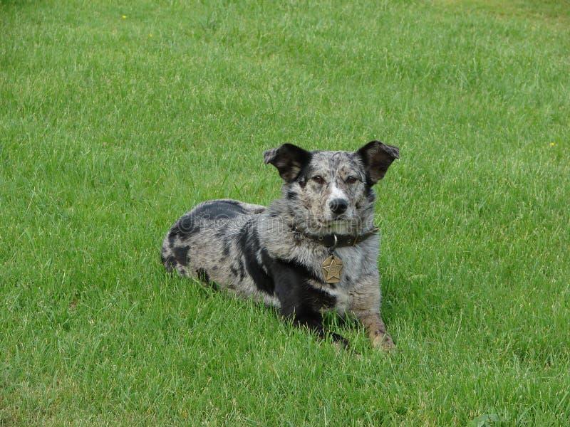 Hund på gräset royaltyfri foto