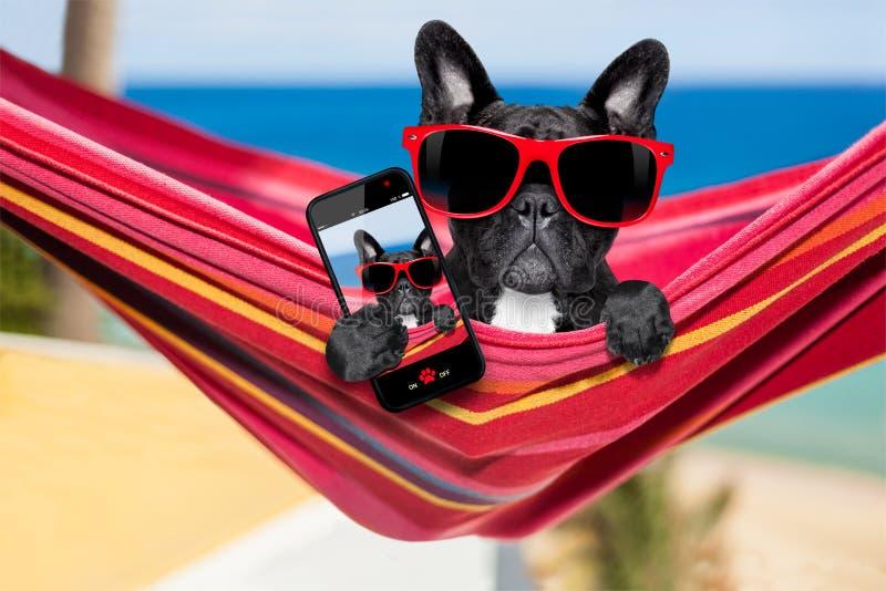 Hund på hängmattan i sommar royaltyfria bilder