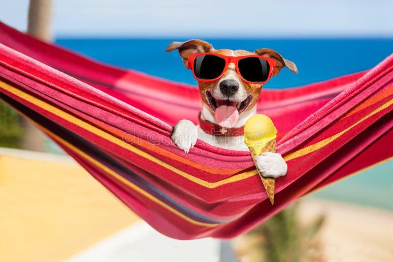 Hund på hängmattan i sommar med glass royaltyfri bild