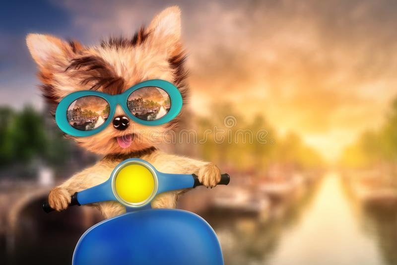 Hund på mopeden med loppbakgrund royaltyfri foto