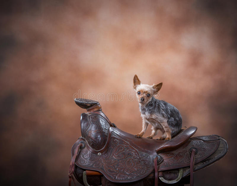 Hund på sadeln royaltyfri foto