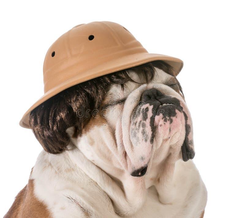 Hund på safari royaltyfri foto