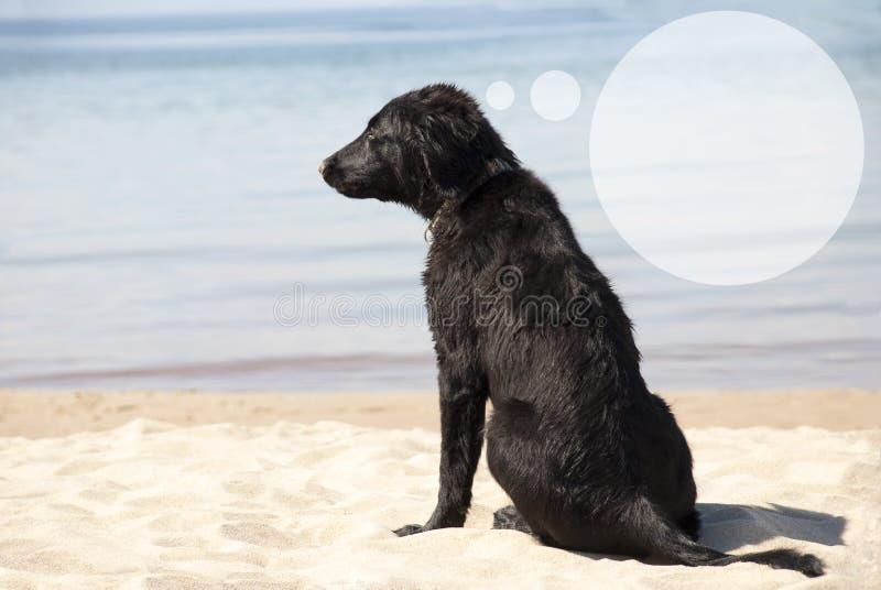 Hund på Sandy Beach, anförandeballong med kopieringsutrymme fotografering för bildbyråer