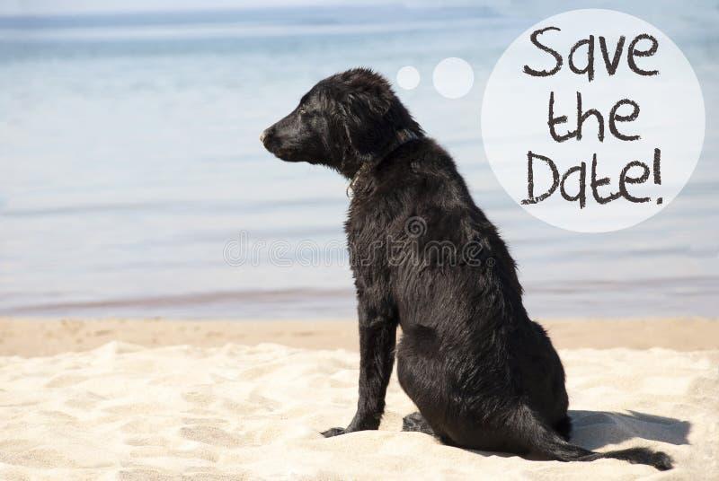 Hund på Sandy Beach, texträddning datumet royaltyfri fotografi