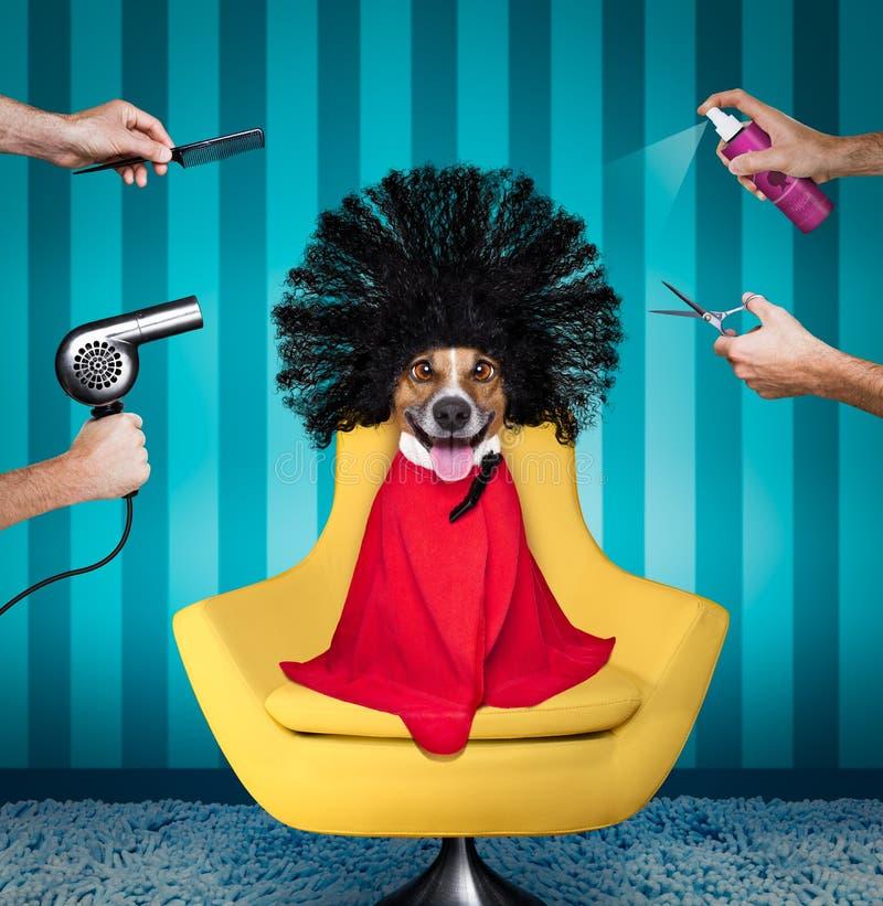 Hund på skönhetsalongen fotografering för bildbyråer