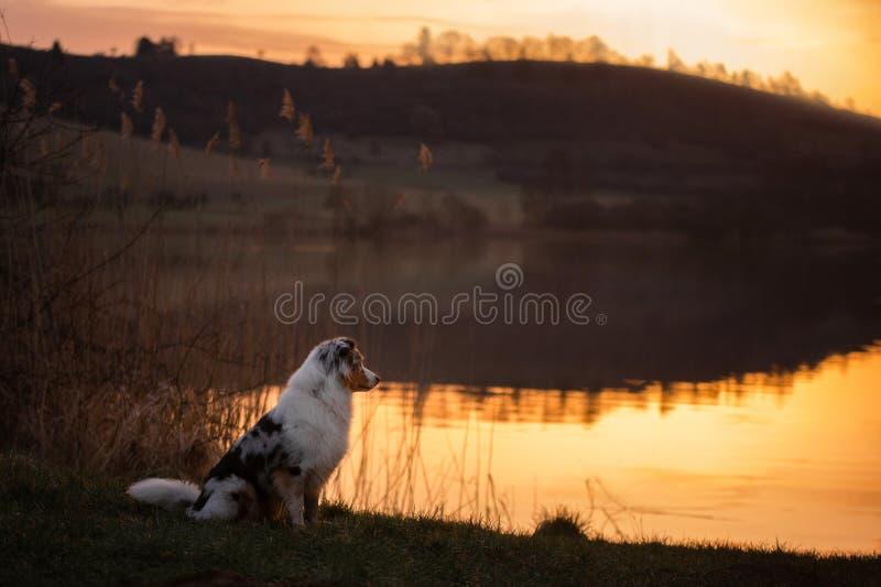 Hund på solnedgången vid sjön Husdjur i natur arkivfoton
