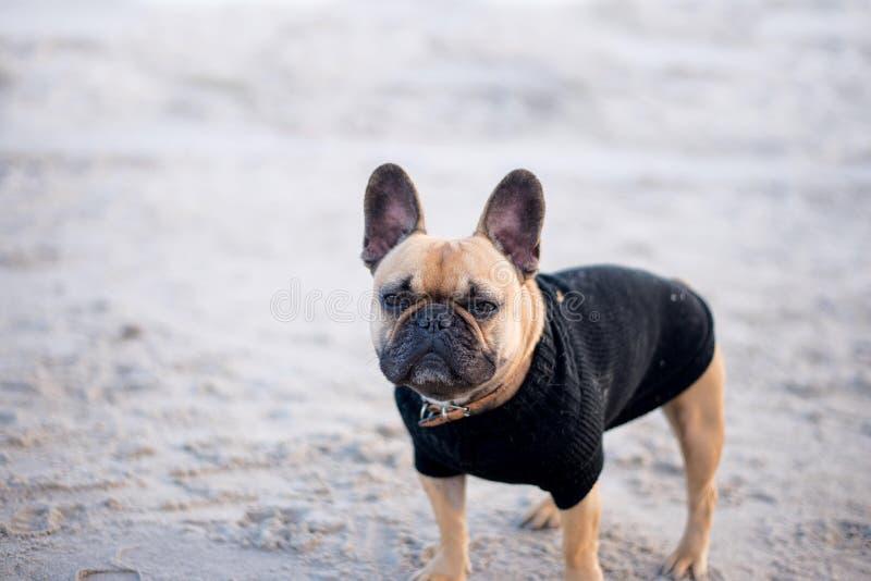 Hund på strandbilderna royaltyfria foton