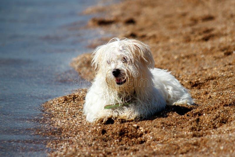 Hund på stranden arkivbild