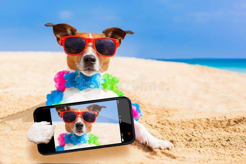 Hund på strandselfien royaltyfri foto