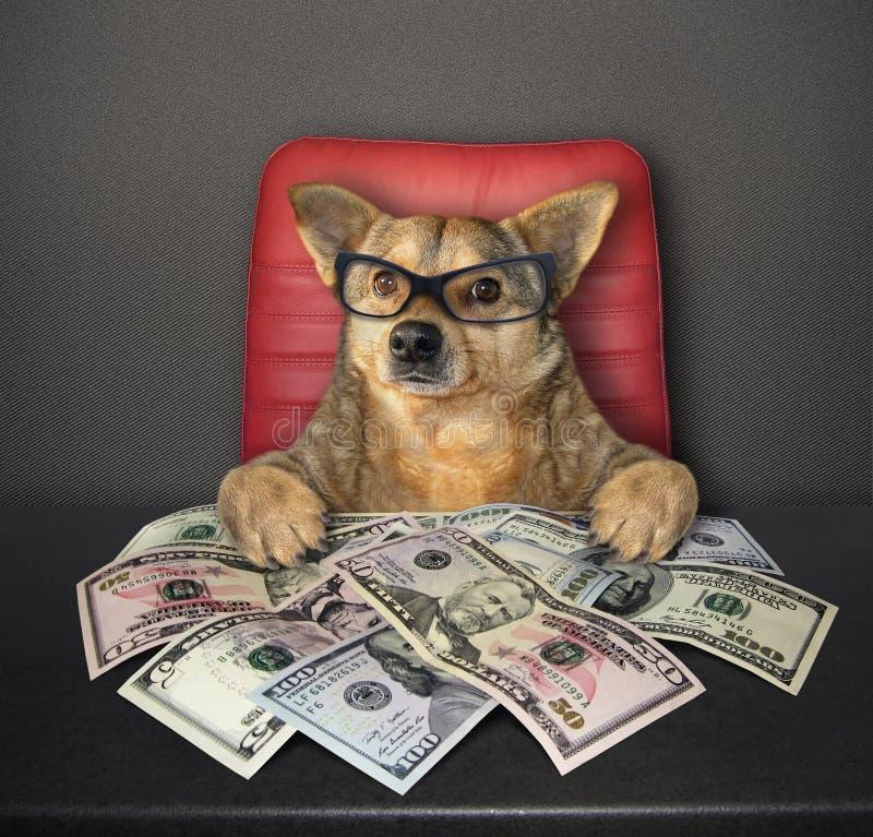 Hund på tabellen med dollar 2 arkivbilder