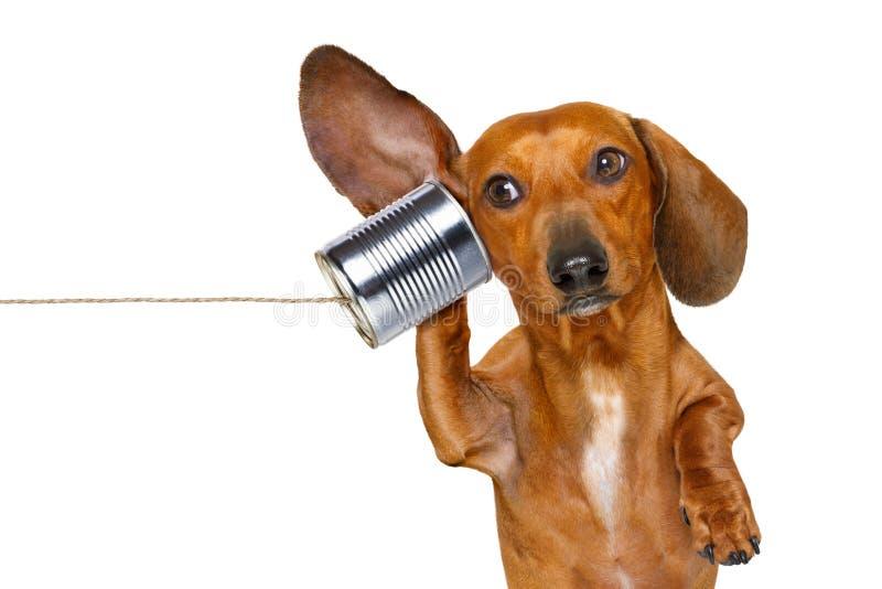 Hund på telefonen som försiktigt lyssnar arkivbilder