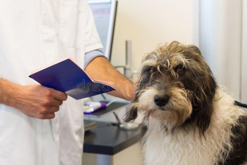 Hund på veterinären arkivfoton