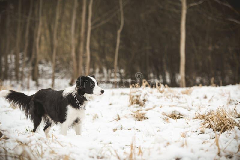 Hund på vinterfält arkivbilder