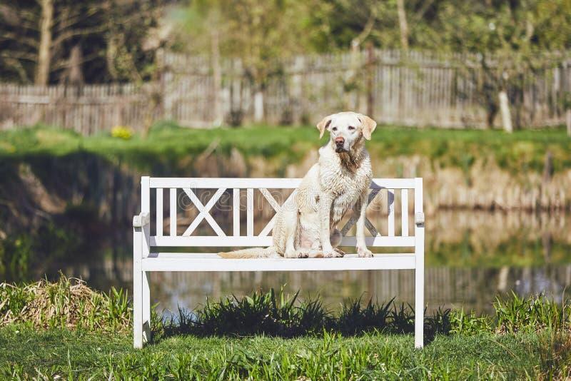 Hund på woodembänken royaltyfri fotografi