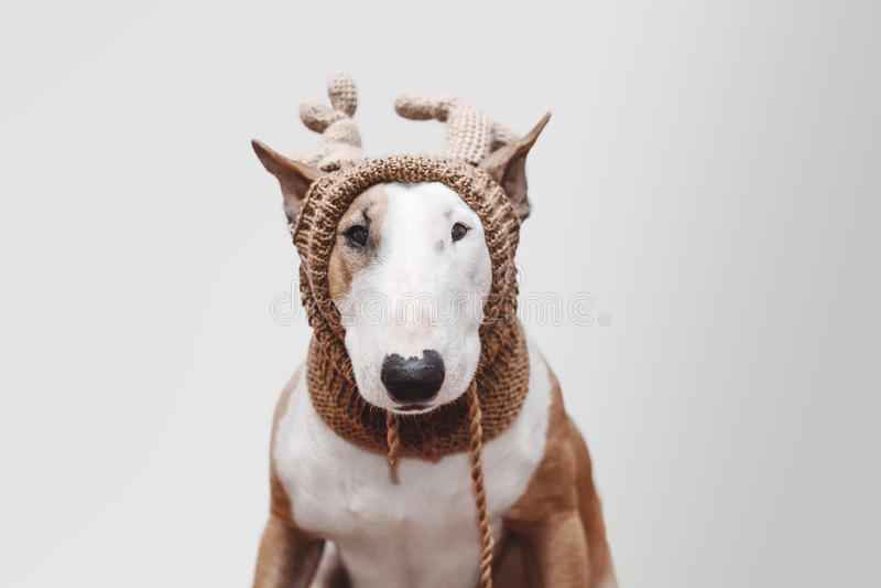 Hund, Rotwild lizenzfreie stockbilder
