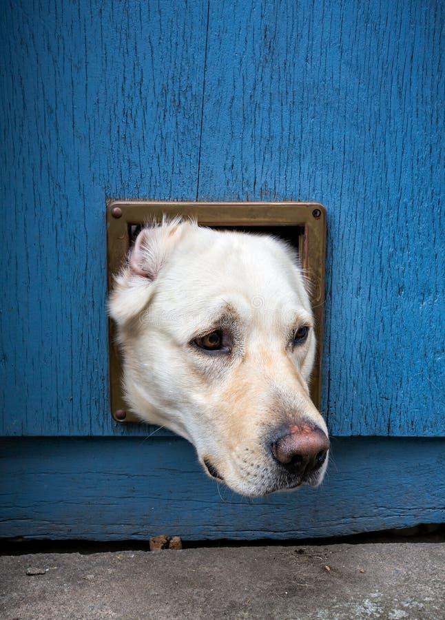 Hund-` s Kopf durch Katzenklappe lizenzfreie stockbilder