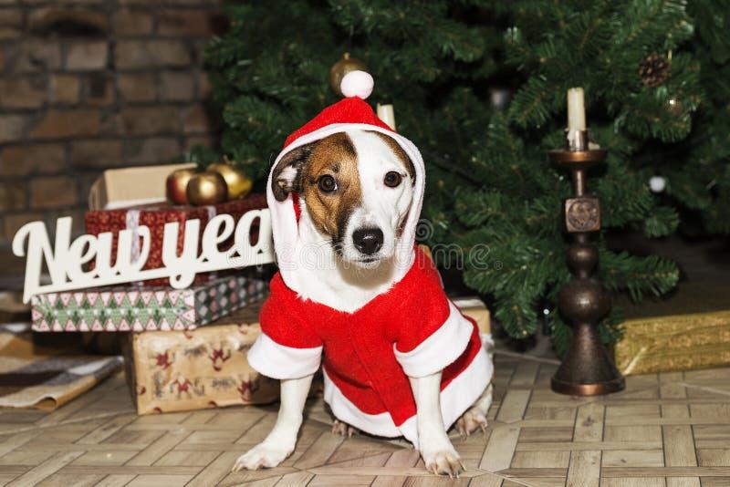 Hund in Sankt-Klage lizenzfreie stockfotografie