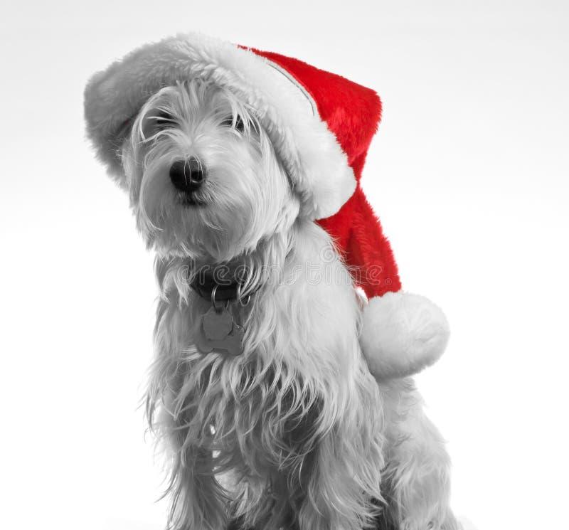 hund santa royaltyfri fotografi