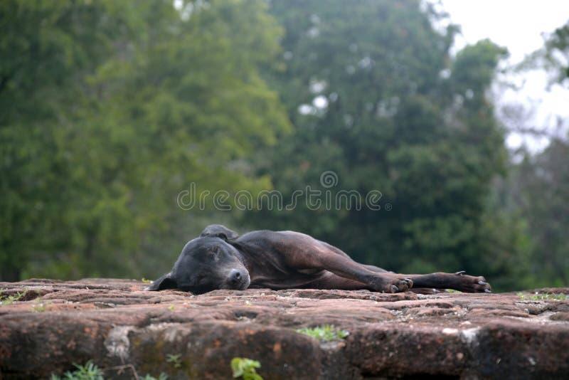 Hund schläft auf alten Ruinen lizenzfreies stockfoto