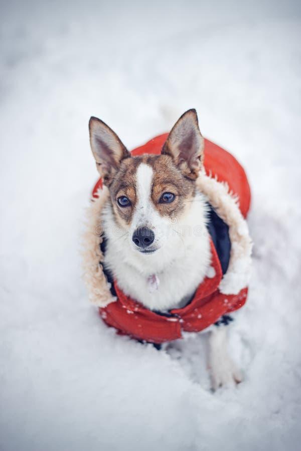 Hund, Schnee stockbild