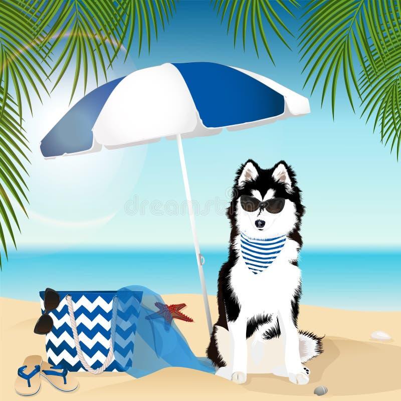 Hund Schwimmenring Sandy Beach Sommerzubehör lizenzfreie abbildung