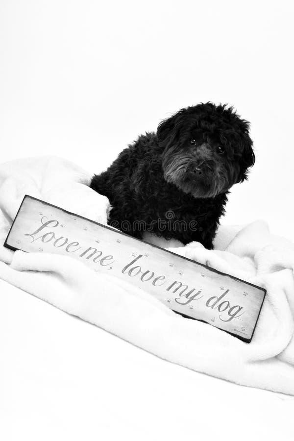 Hund Sitting2 stockfotografie