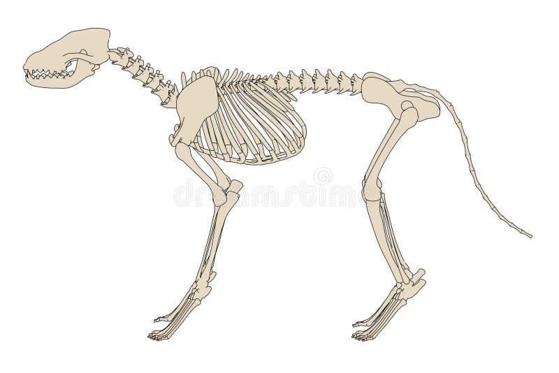 Hund- skelett stock illustrationer