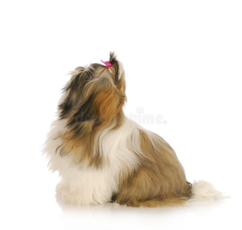 Hund som är klar att hoppa upp royaltyfri foto
