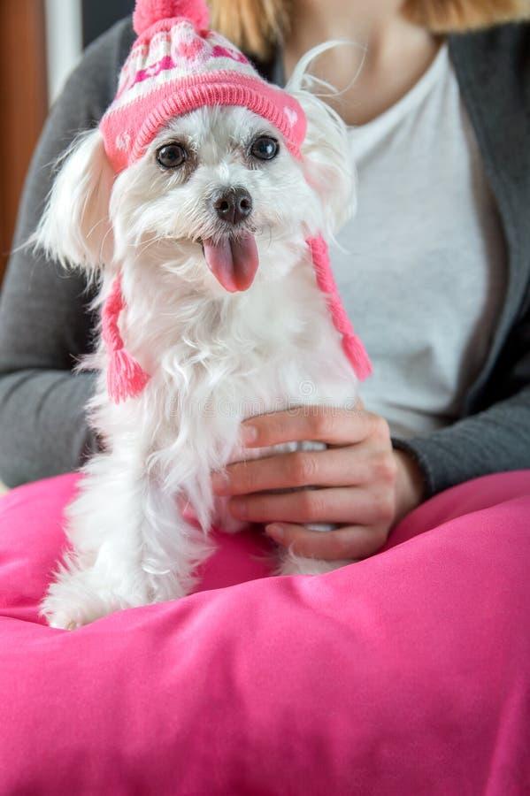 Hund som bär ett lock royaltyfria foton