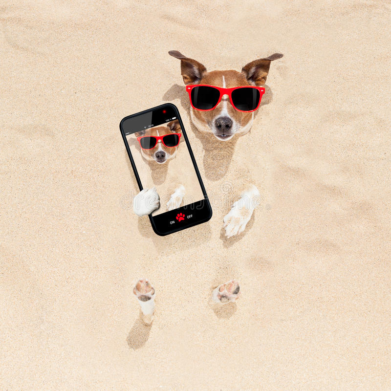 Hund som begravas i sandselfie royaltyfri bild