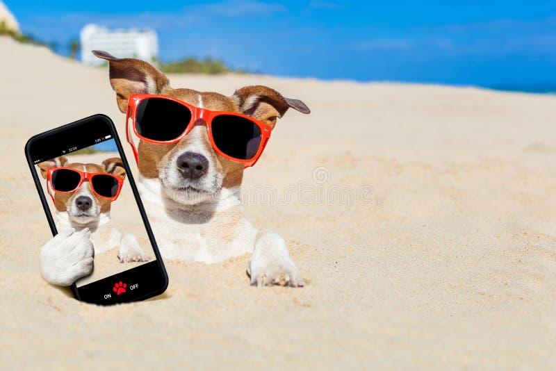 Hund som begravas i sandselfie arkivfoton