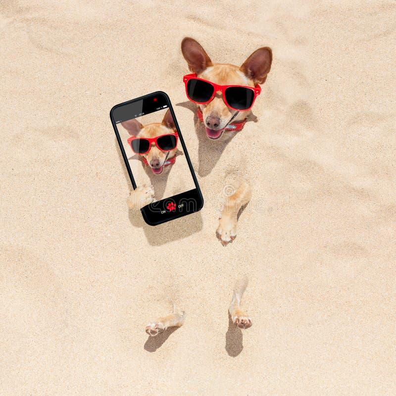 Hund som begravas i sandselfie arkivbild