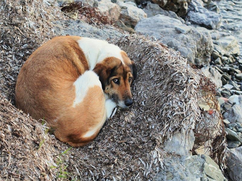 Hund som beskyddar från förkylning arkivfoton