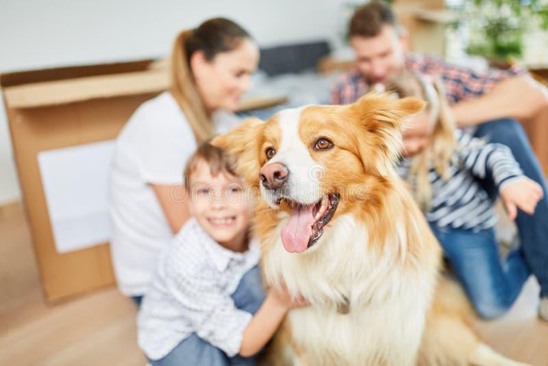 Hund som ett husdjur och en vän när inflyttning royaltyfri fotografi