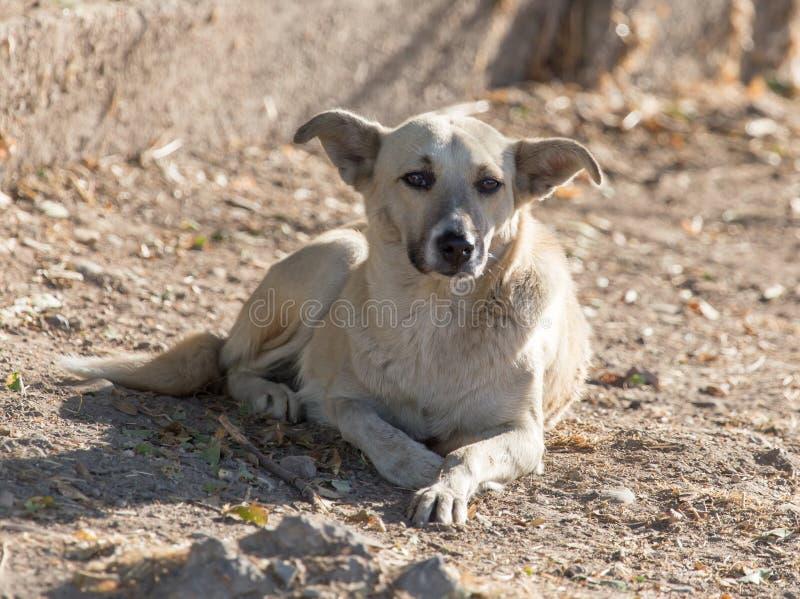 Hund som går i natur fotografering för bildbyråer