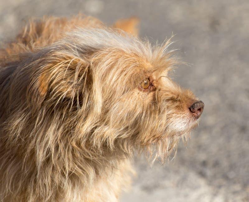 Hund som går i natur arkivbild