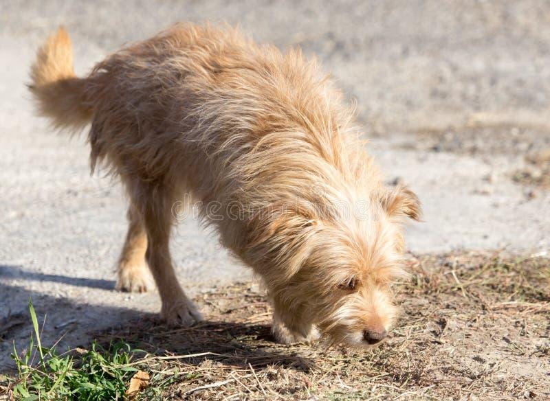 Hund som går i natur arkivbilder