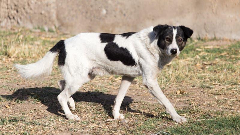 Hund som går i natur royaltyfri bild