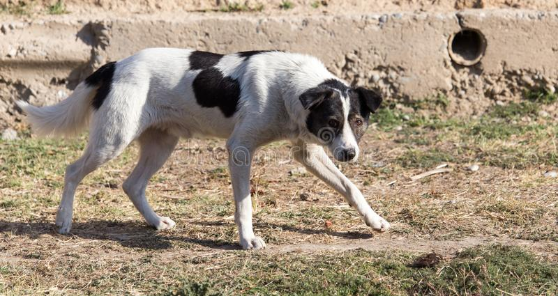 Hund som går i natur royaltyfri fotografi