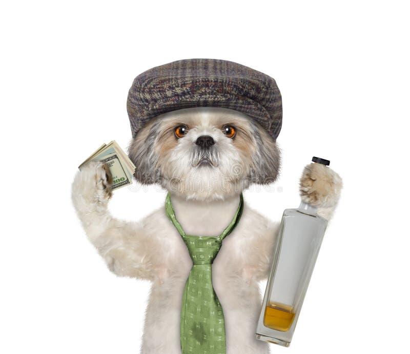 Hund som har roligt och dricker alkohol arkivbild