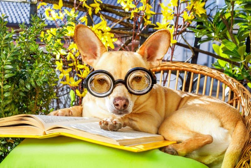 Hund som läser en bok arkivbild