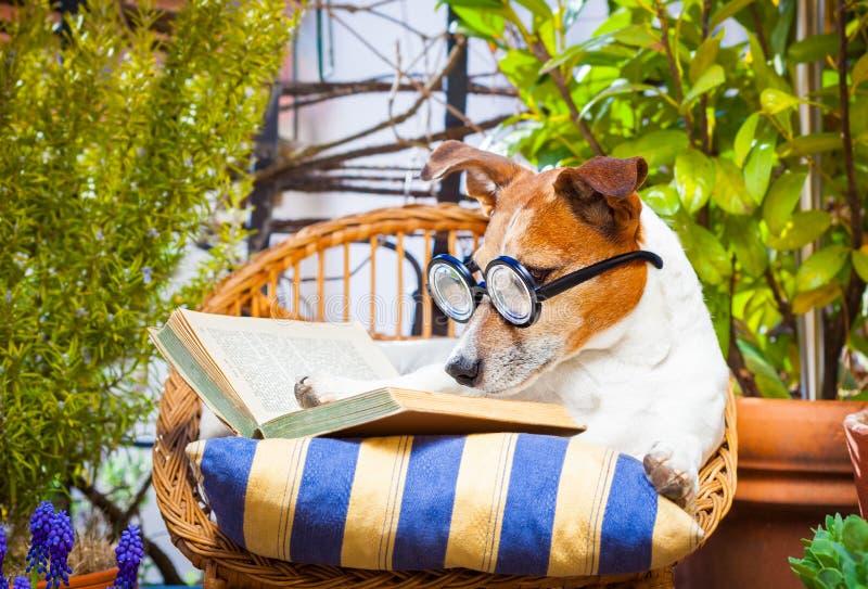 Hund som läser en bok arkivfoto