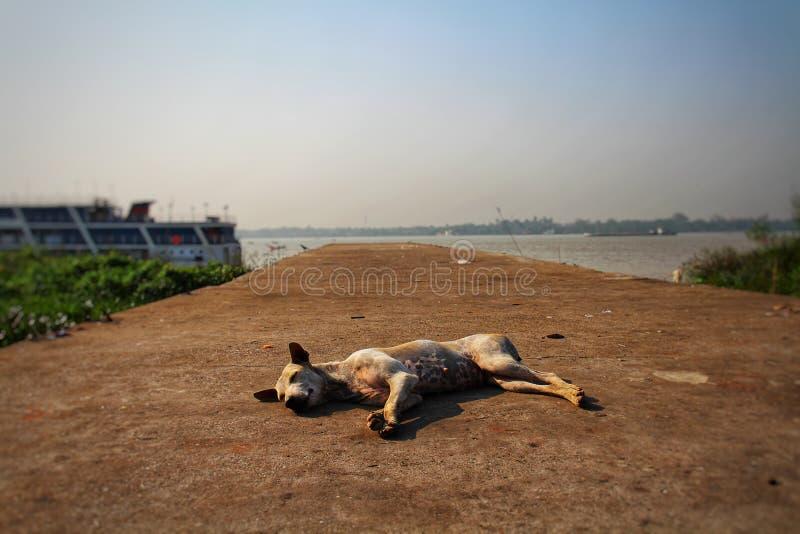 Hund som ligger på skeppsdockan royaltyfri bild